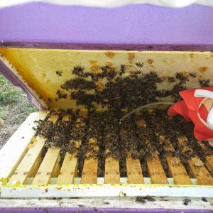 bestrijden bijenziektes